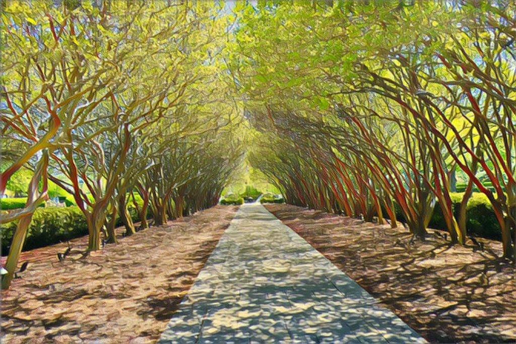 The Arboretum's Crepe Myrtle Allee by louannwarren