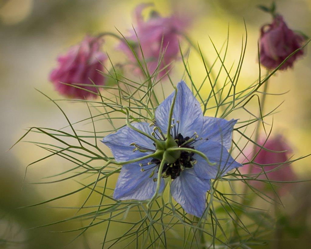Spring Flowers by mamazuzi