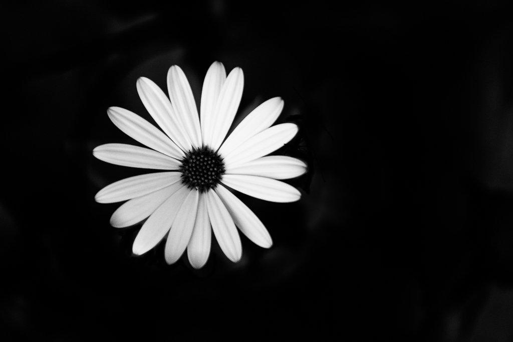 B + W flower by peta_m