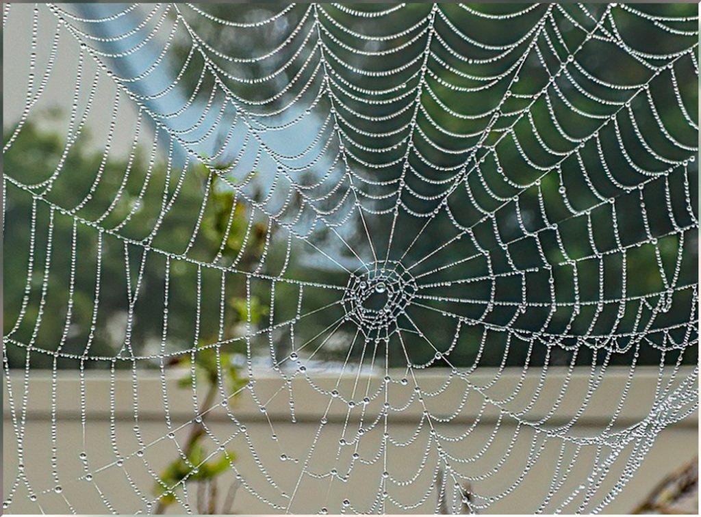 My first spider web! by ludwigsdiana