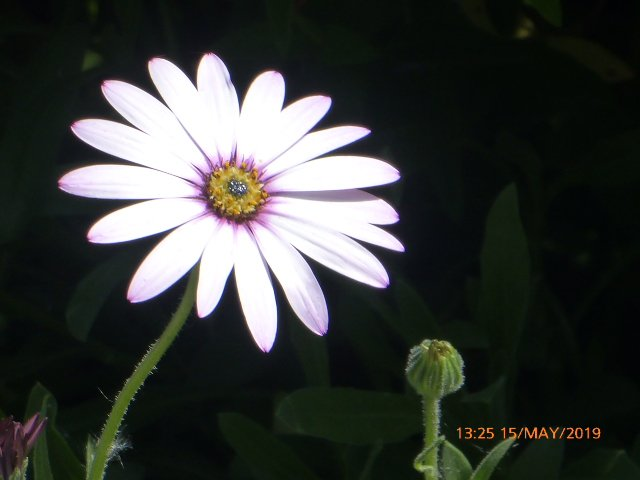 I must lookup  the name of this flower? by snowy