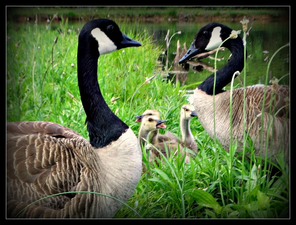 It's a Family Affair by moviegal1