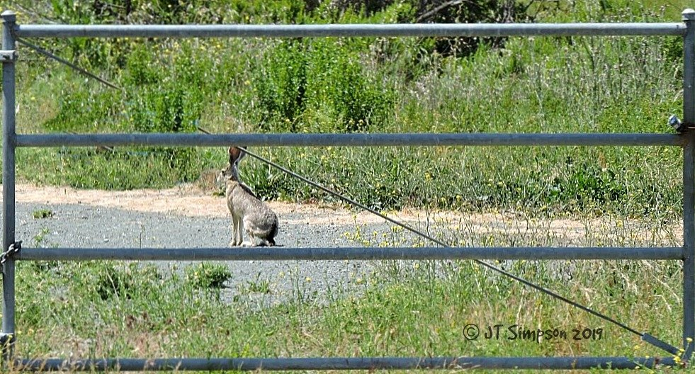 "Living a ""wildlife"" in a Gated Community...  by soylentgreenpics"