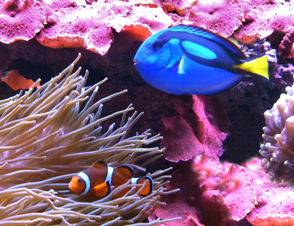 Something Fishy -  Nemo and Dory by onewing