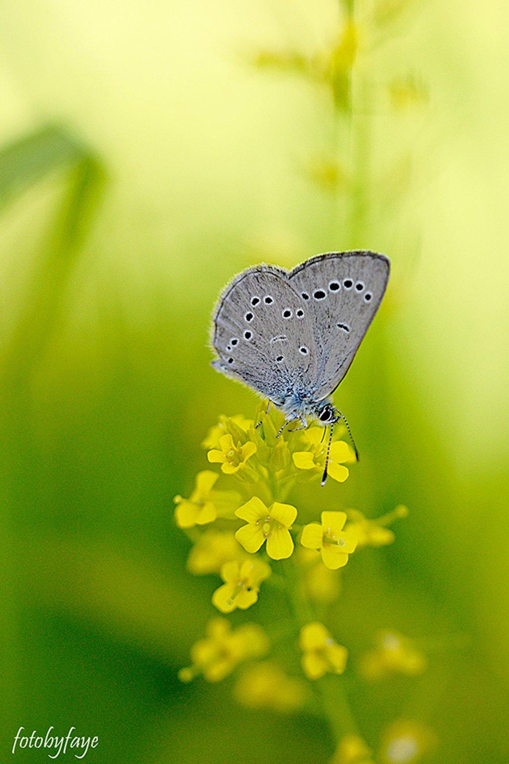 Sipping on Nectar! by fayefaye