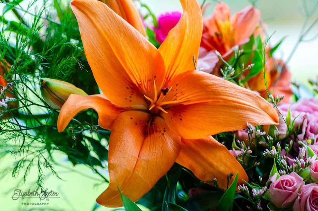 Orange lily by elisasaeter
