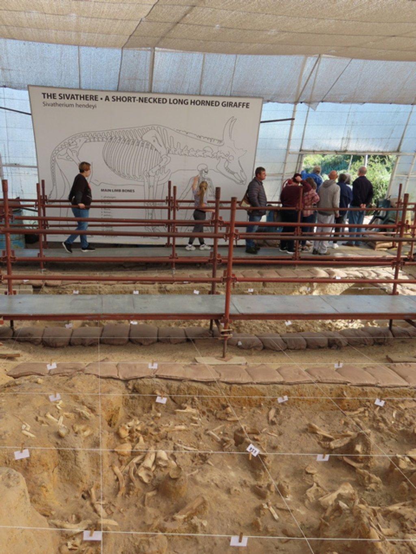 Fossil Farm (2) by ninaganci
