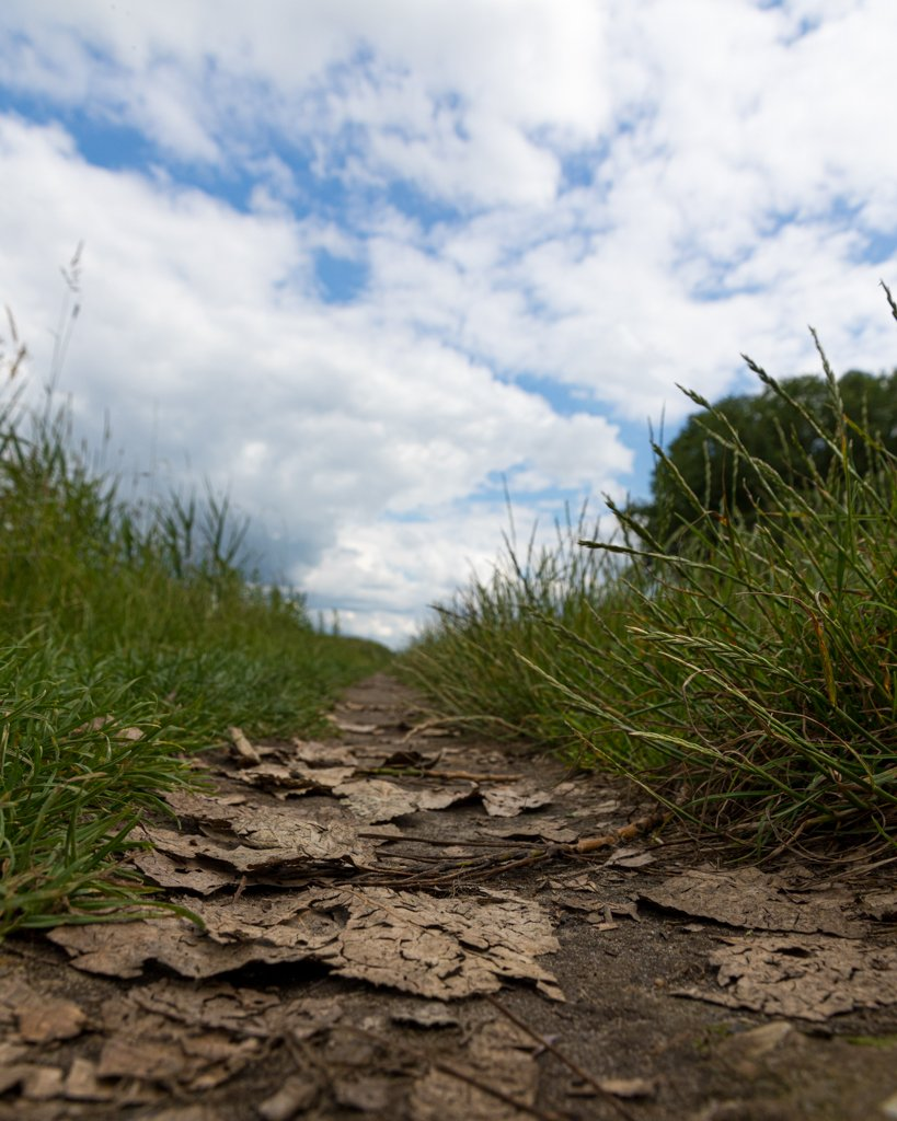 Path through the grass by leonbuys83