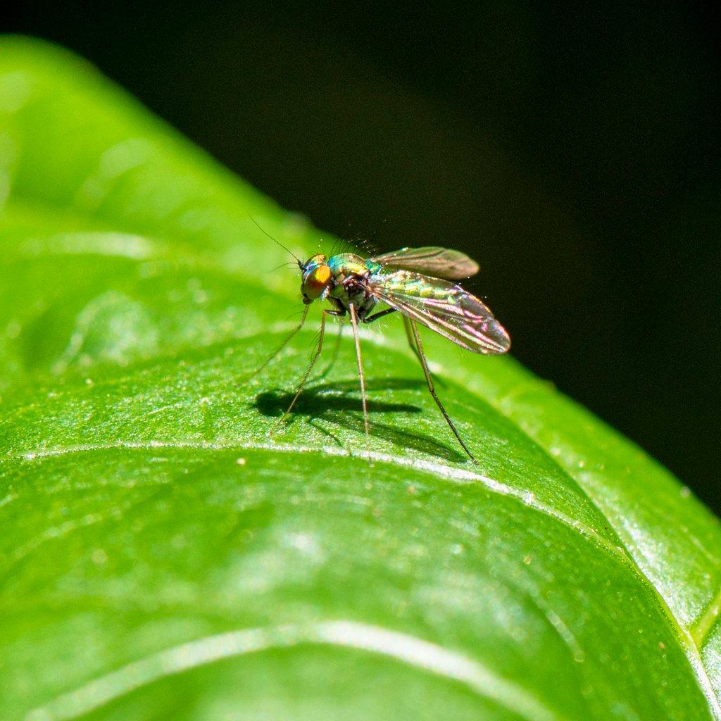 Tiny fly by ksmale
