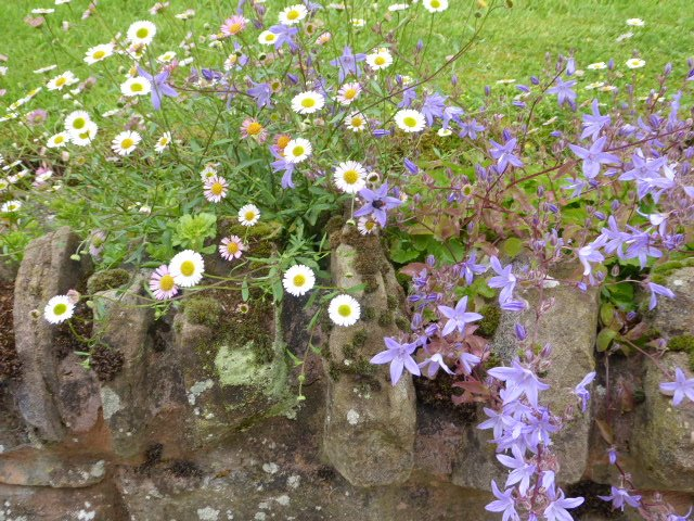 Flowers over the garden wall  by snowy