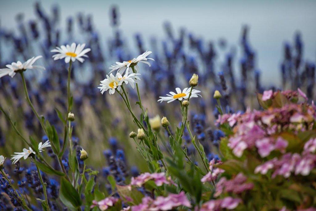 Summer flowers by pamknowler