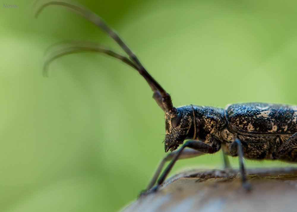 Creepy beetle by novab