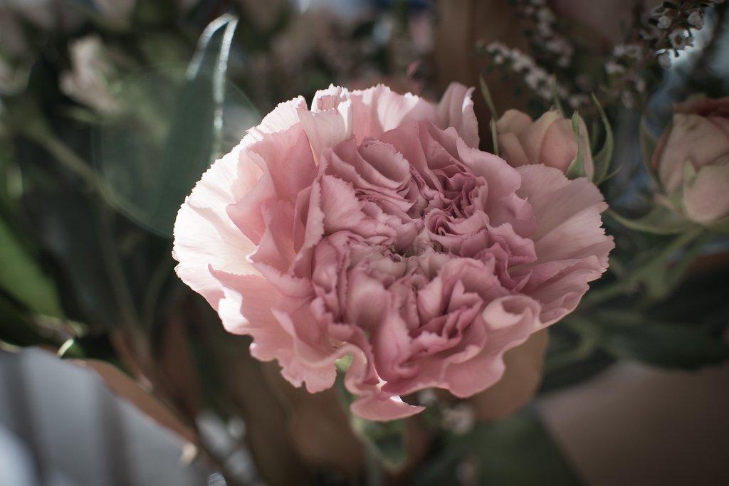 flower by peta_m