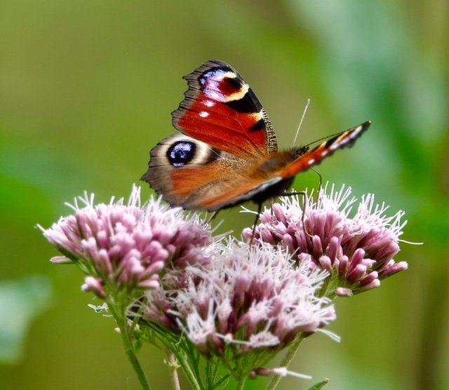Beautiful butterfly! by chris17