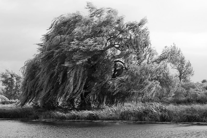 Wind in the willows by helenhall