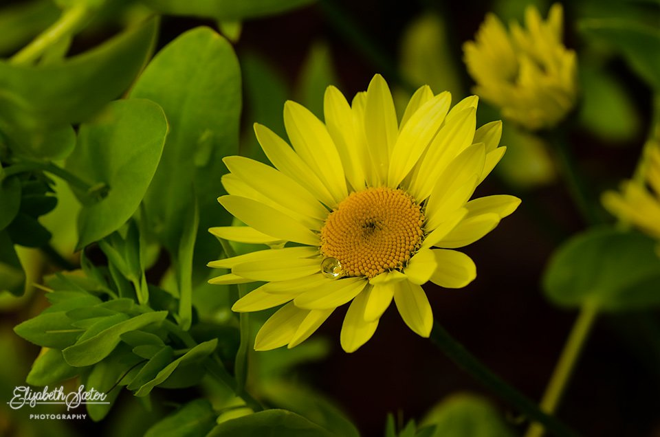 Yellow flower by elisasaeter