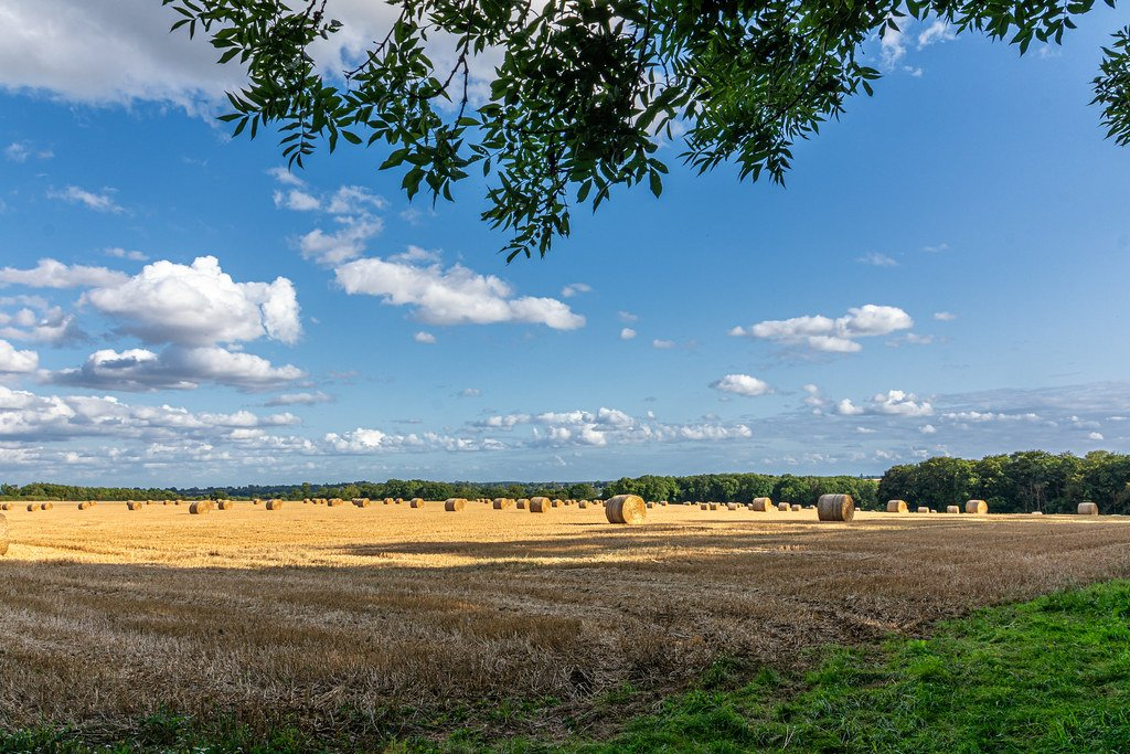 More Bales by rjb71