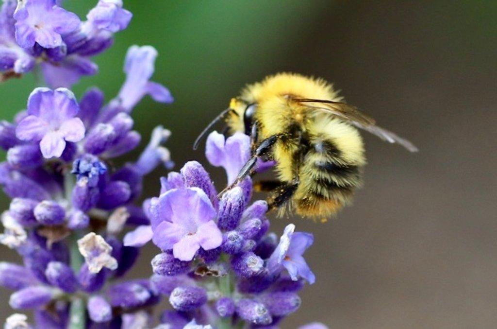 A Tiny Buzzy by carole_sandford