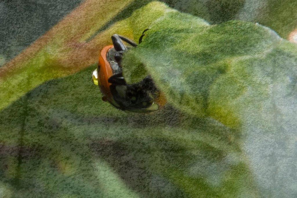 Ladybird by helenhall