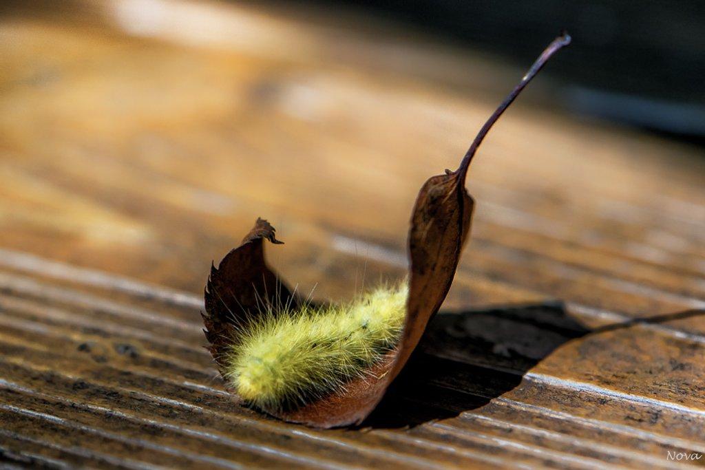 Caterpillar rocking chair by novab