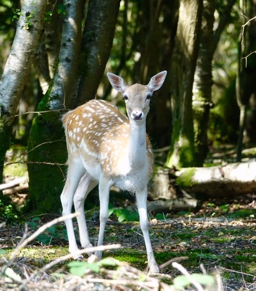 Bambi! by chris17
