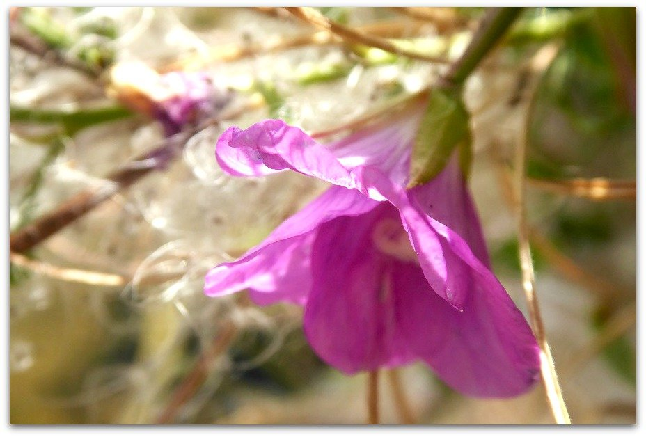 Unknown flower by helenhall
