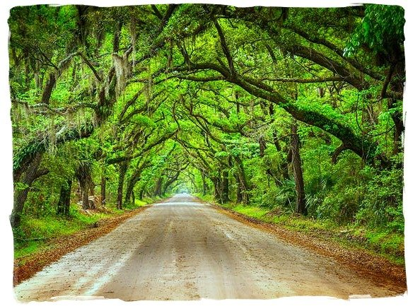 Road to Botany Bay  by peggysirk