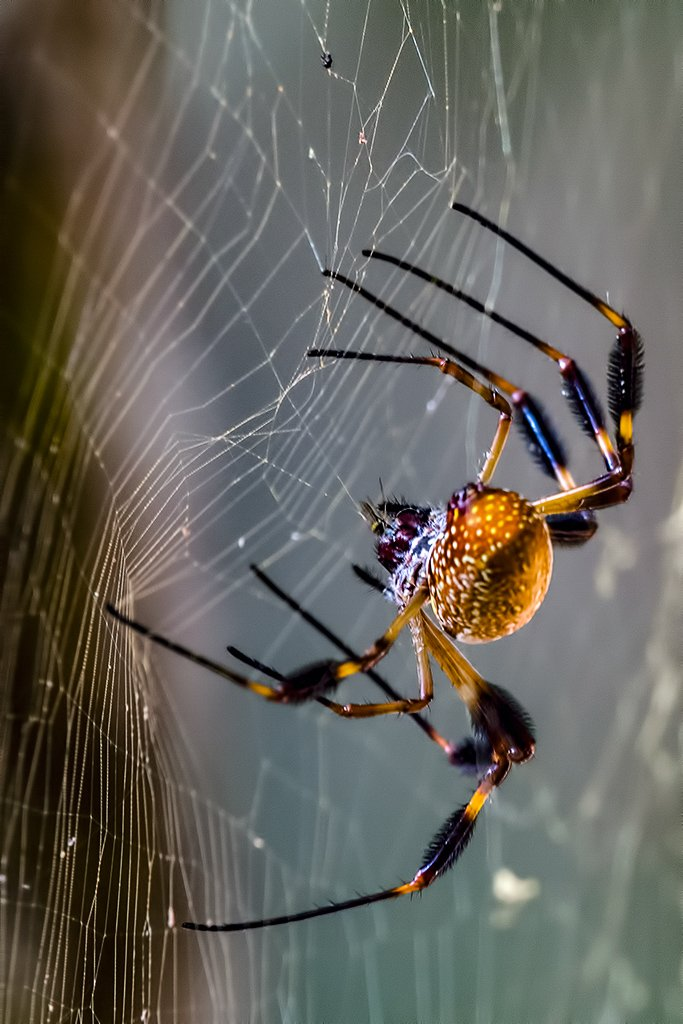 Catching it's prey by photographycrazy