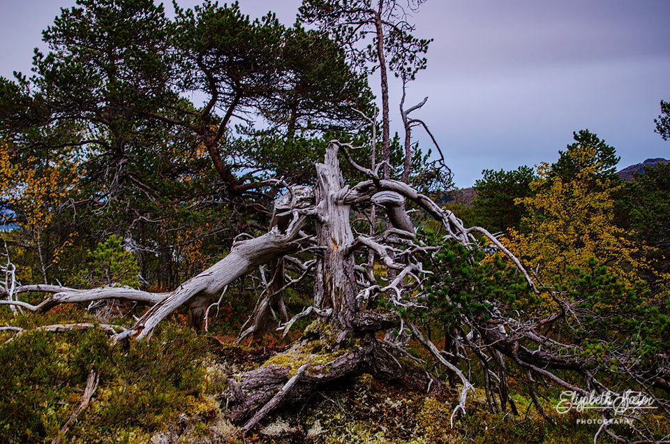 Tree root by elisasaeter