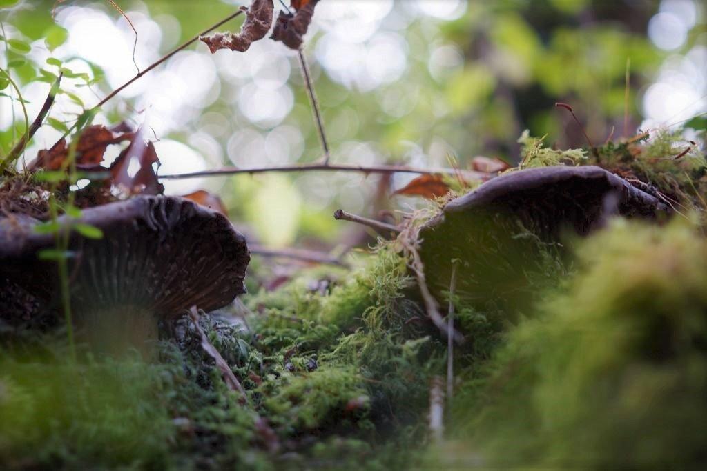 A mushroom's eye view. by sabresun