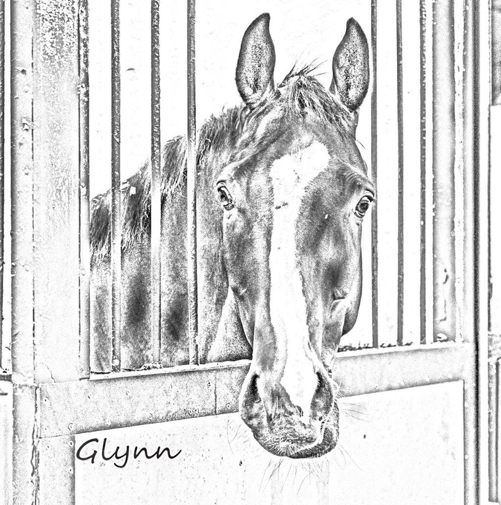 Glynn by barrowlane