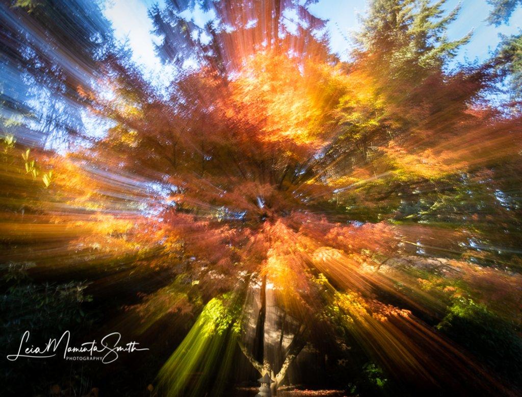 Burst of Autumn Colors by princessleia