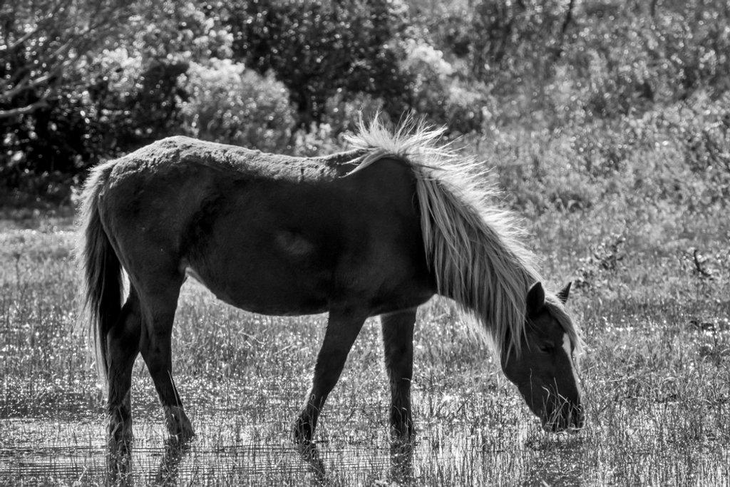 Wild Pony by joansmor