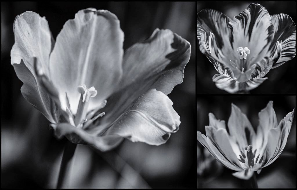 Flower collage by nicolecampbell