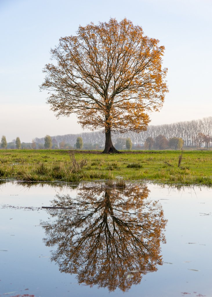 A tree and its reflection by leonbuys83