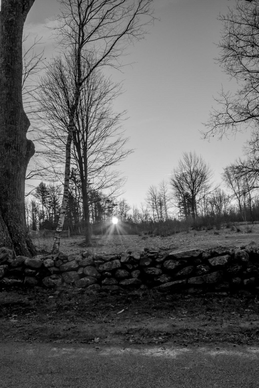 Another Sunburst by joansmor
