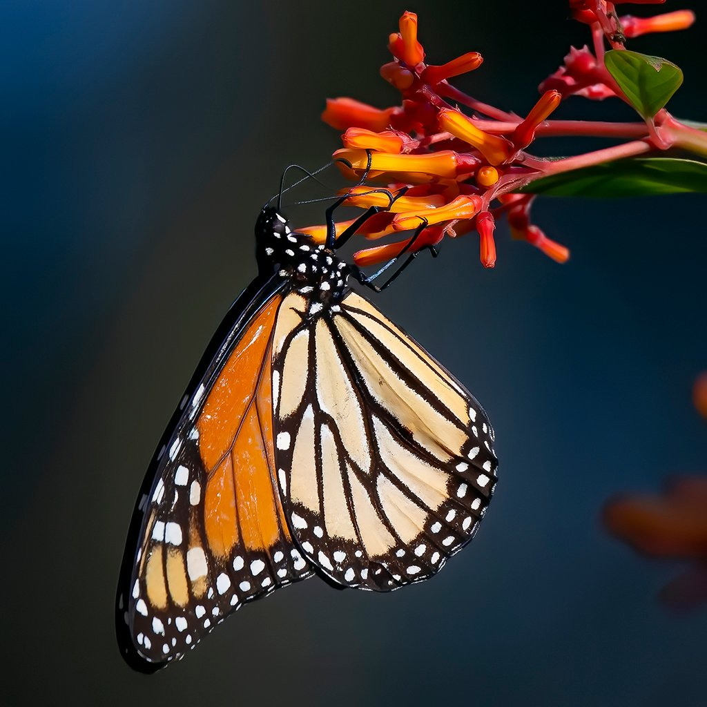 The last butterrfly,,, by photographycrazy