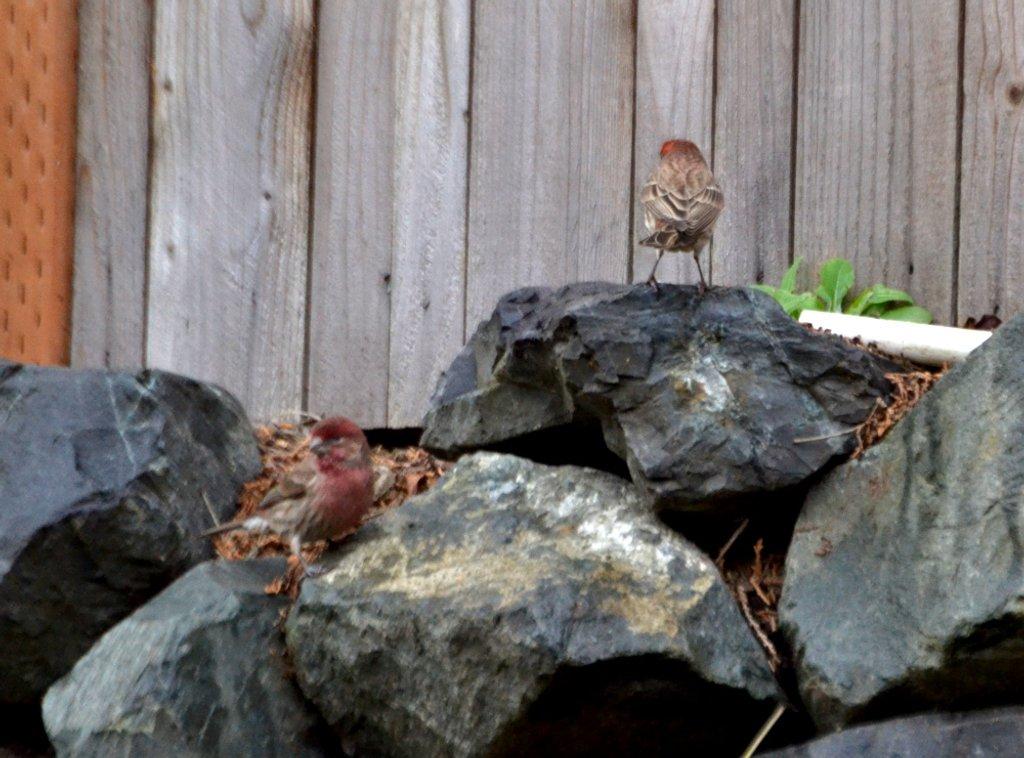 Finch Back by stephomy