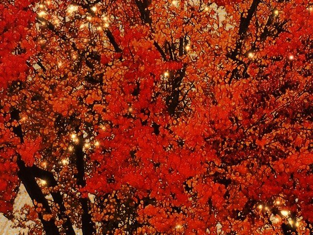 December Tree by joysfocus