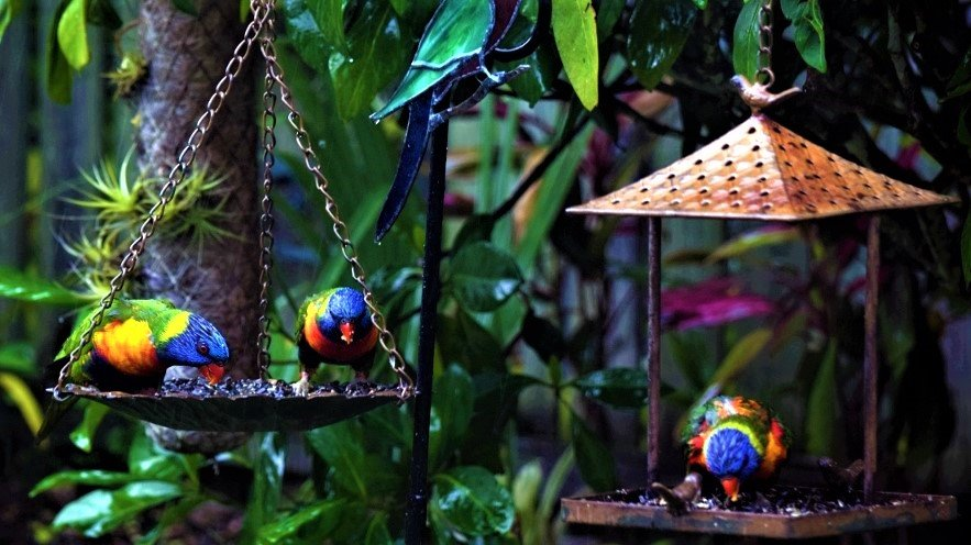 Soggy Lorikeets & Soggy Sunflower Seeds ~   by happysnaps