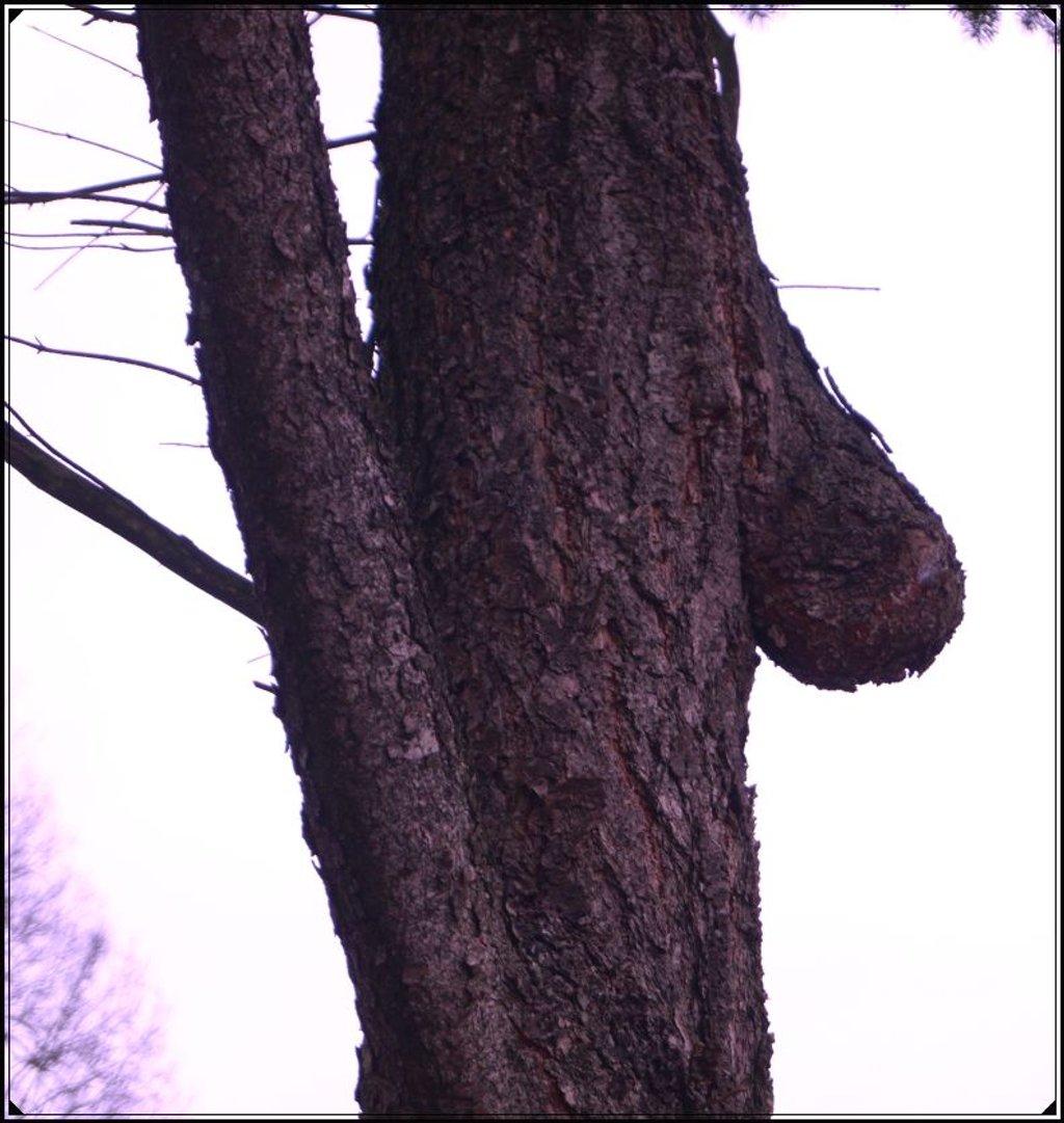 special tree by gijsje