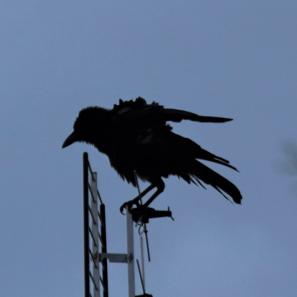 Silhouette Of A Very Cross Crow ~ by happysnaps