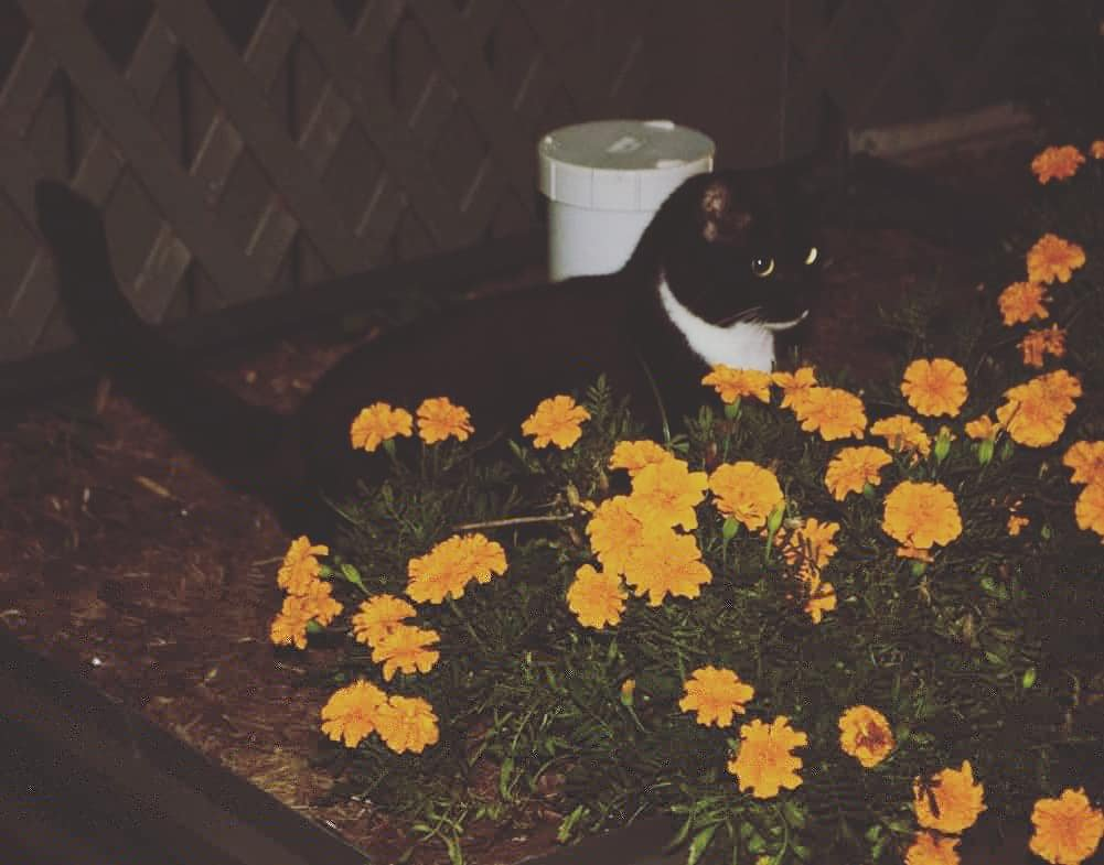 Zara playing in the marigolds  by motherxmind