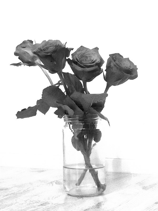 Still Life with Roses by helenhall