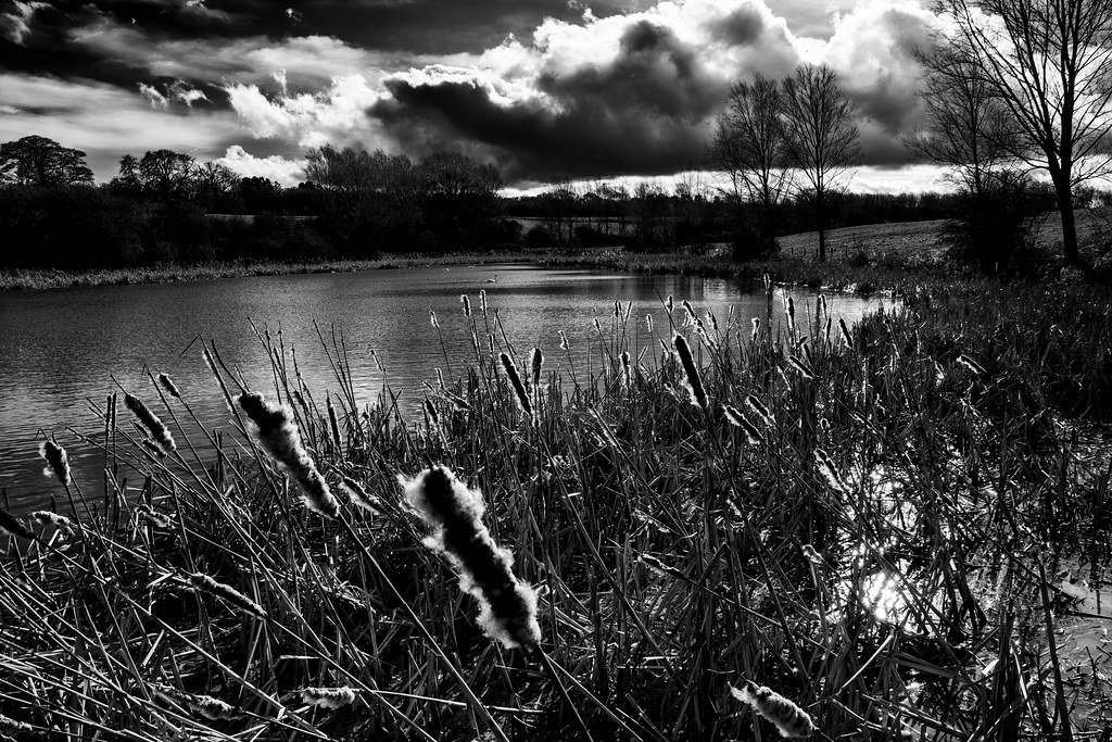 Bullrushes (cattails) by rjb71