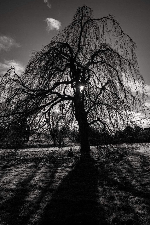 Scary Tree by rjb71