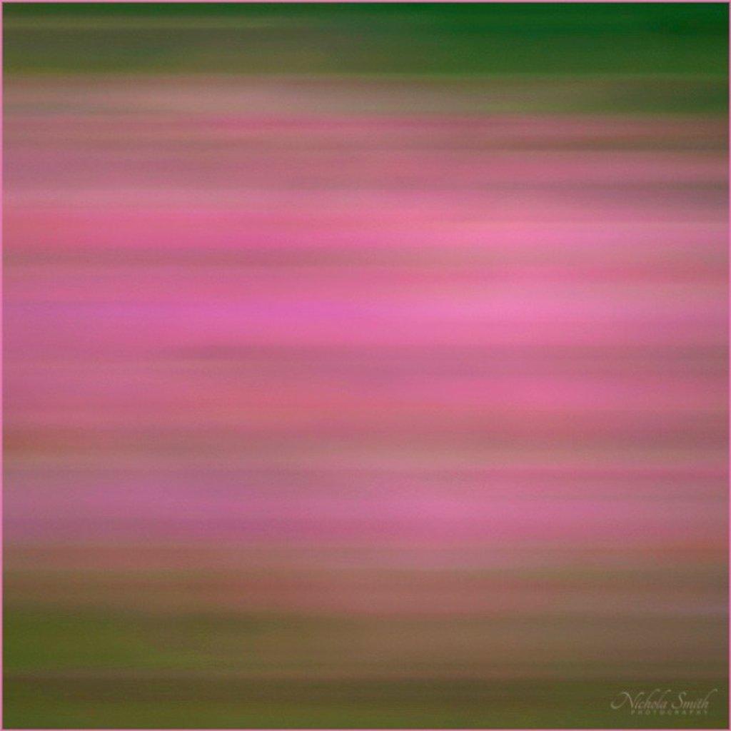 Pink #3 by nickspicsnz