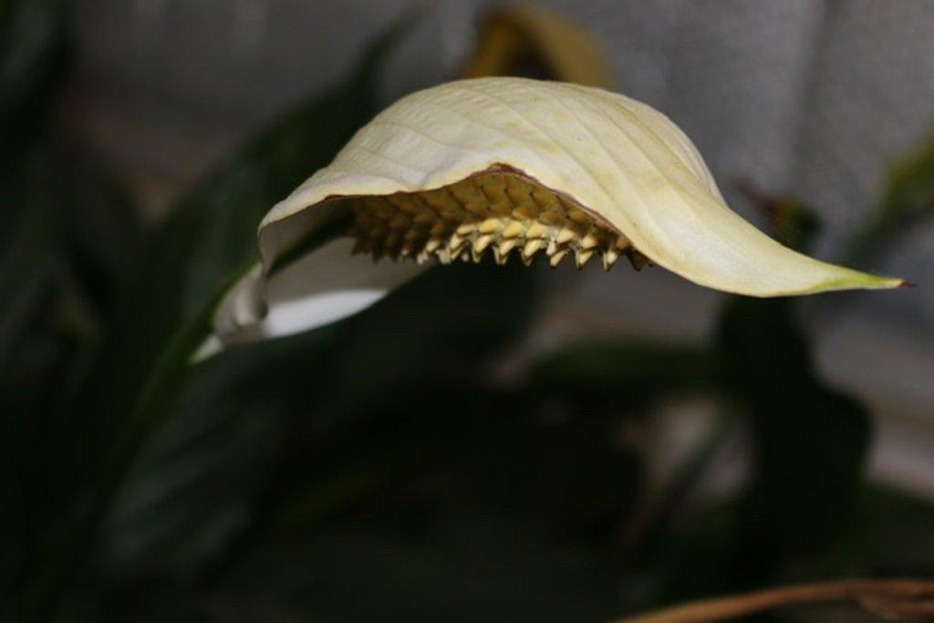 Flower by kathyboyles