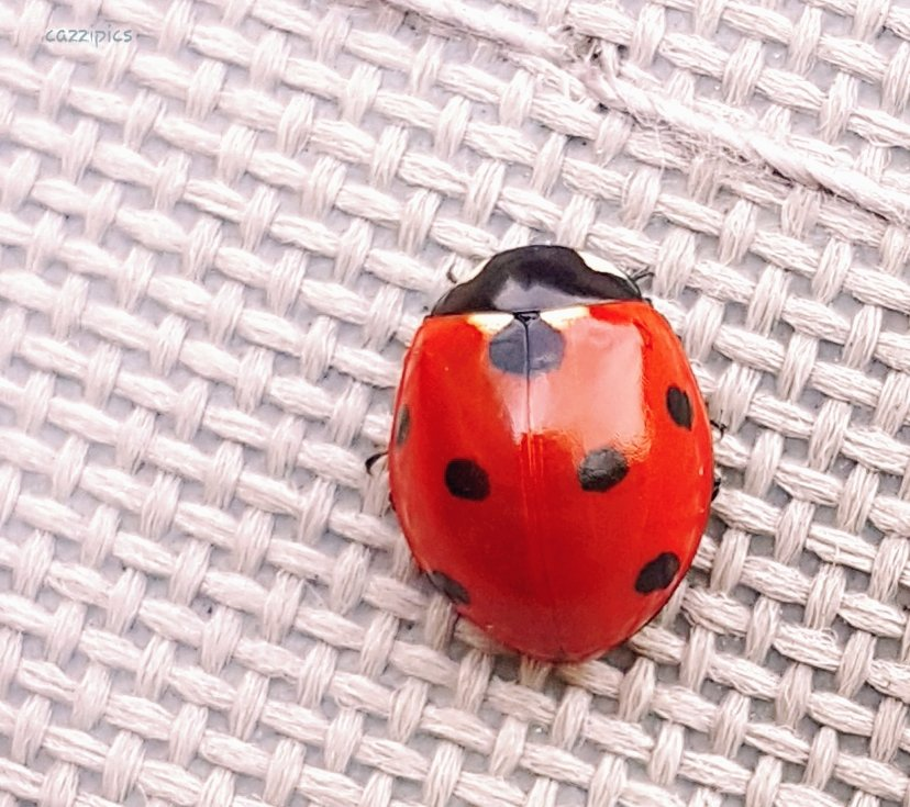 Red Monday Ladybird by serendypyty