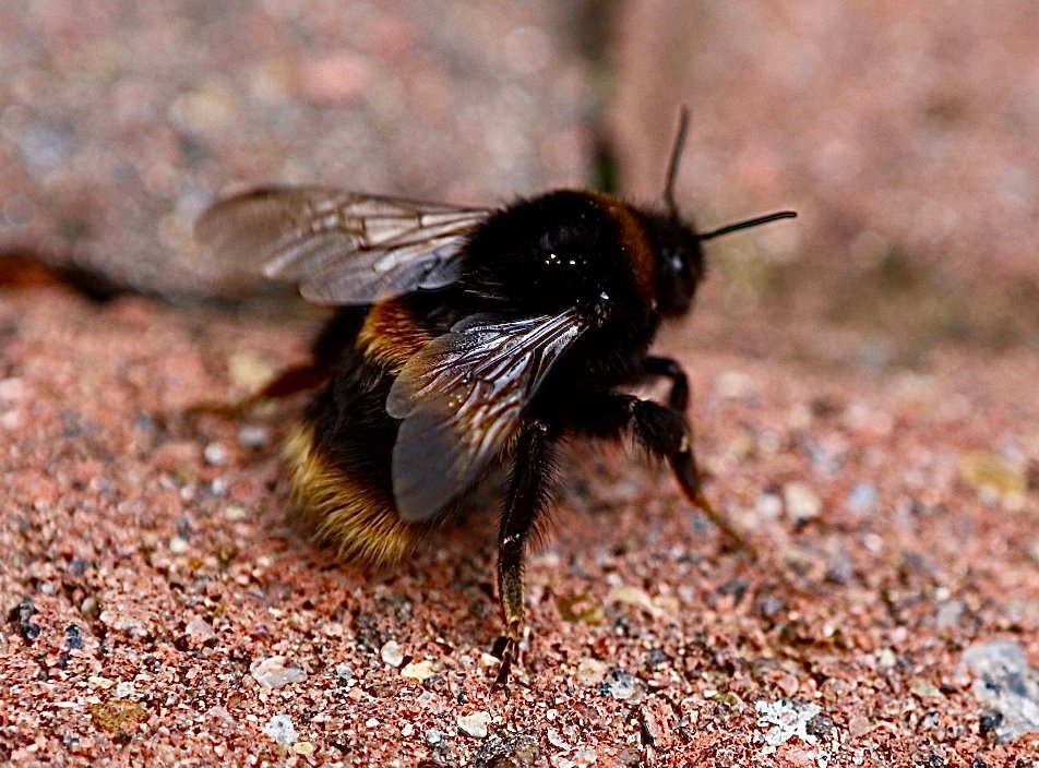 Early Bee by carole_sandford